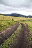 Road in field and village. Dirty road in field and village Stock Photography