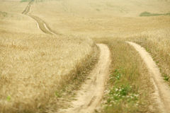 Road in a field of wheat Stock Photos