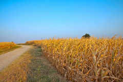 Road in the fields Stock Photography