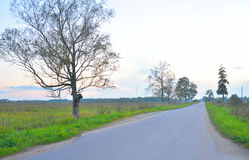 Road between the fields at sunset. Royalty Free Stock Photo