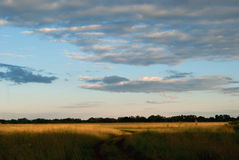 Road in the fields under a beautiful blue cloudy sky Stock Photography