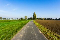 Road between the fields in the village in the summer royalty free stock photos