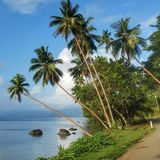 A road in Fiji. A road between the Cousteau Resort and Savusavu town Stock Photo