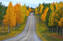 Road in Finland. Hilly road in North Finland in autumn Royalty Free Stock Images
