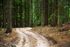 Road in fir tree forest Stock Photos