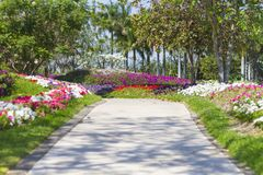 Road flanked by spring flowers in a garden royalty free stock photography