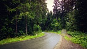 Road flanked by woods Stock Photography