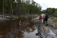 The road flooded because of the actions of beavers who built the dam. Royalty Free Stock Photo