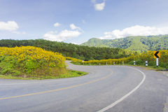 Road Flower graden Royalty Free Stock Images