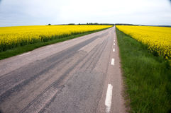 Road in flowerfield royalty free stock photos