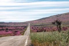 Road through the Flowering desert Atacama Stock Photos