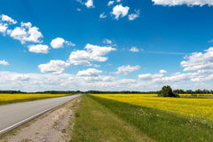 Road  flowering fields under the blue sky Stock Photography