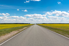 Road  flowering fields under the blue sky Stock Photo