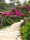 Road in flowering garden. Road in flowering colorful garden stock photos