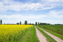 Road through flowering  rapeseed fields Royalty Free Stock Photography