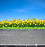 Road and flowers. Roadside view and yellow flowers on blue sky Stock Image