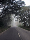 Road in Fog. A driveway surrounded by fog in the morning Royalty Free Stock Images