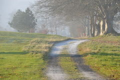 Road and fog Stock Photography