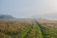 Road in fog. Autumn. foggy morning royalty free stock photos