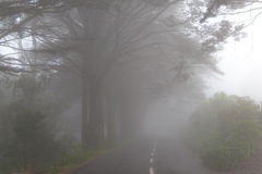 Road in a fog in a cloud in the mountains of Madeira Island, Portugal Royalty Free Stock Photo