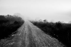 Road in the fog. A country road in the fog, with some almost invisible plants and trees Royalty Free Stock Image
