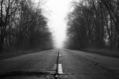 The road in the fog. Country Road Tree Canopy in the Fog Stock Photography