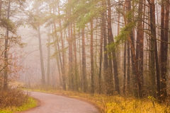 Road fog in forest Stock Image