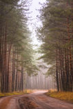 Road fog in forest Royalty Free Stock Photo