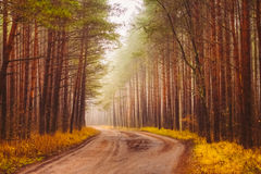 Road Fog In Forest Stock Photos