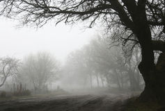 Road into the fog Royalty Free Stock Photo