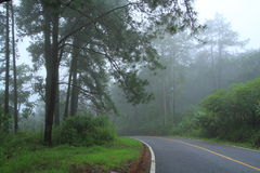 Road and Fog. Royalty Free Stock Image