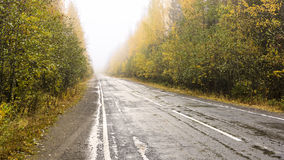 Road through the foggy autumn forest Stock Photography