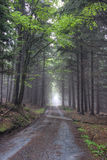 Road in foggy coniferous forest Stock Image
