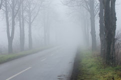 Road on foggy day. Road with tree alley on thick fog, short sighted ahead royalty free stock image