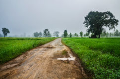 road foggy and field Royalty Free Stock Photo