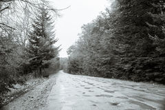 Road in a foggy forest Royalty Free Stock Image