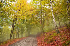 Road in the foggy forest in autumn. Mountain road in the foggy forest in autumn royalty free stock photography