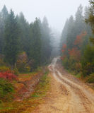 Road in foggy forest at autumn Stock Photos