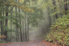 Road through a Foggy Forest Royalty Free Stock Image