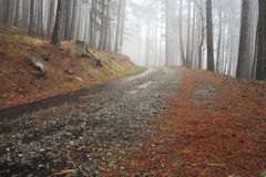 Road in a foggy forest Stock Images
