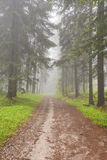 Road through foggy forest in Slovenský Raj in Slovakia Royalty Free Stock Photography