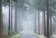 A road through a foggy forrest in autumn stock images