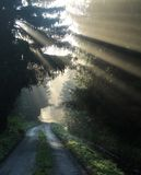 Road in foggy morning Royalty Free Stock Photos