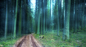 Road in foggy mysterious forest Stock Photos