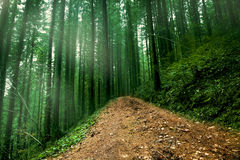 Road in foggy mysterious forest Stock Photo