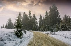 Road through foggy spruce forest in winter. Lovely nature scenery Royalty Free Stock Photography