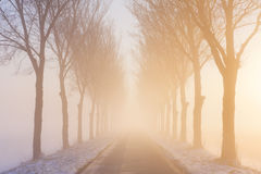 Road through foggy winter landscape in The Netherlands. A straight road and a row of trees on a foggy morning at sunrise. A typical image from the historic Stock Photos