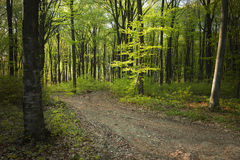 Road in fogy forest Royalty Free Stock Photography