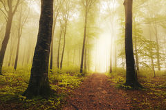 Road in fogy forest Stock Image