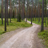 A road in the forest Royalty Free Stock Photography